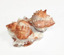 Seashell Soap Set